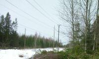 LRF: Skogen för värdefull för kraftledningsgata