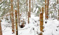 SLU vill digitalisera skogsdata