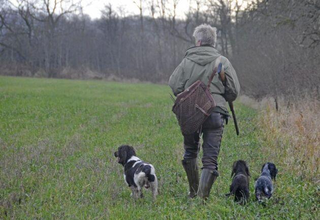 Jakthund väljer man beroende på vilken typ av jakt gårdens folk föredrar.