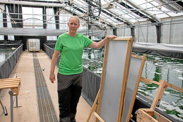 Ebba Olsson är marinbiologen som blev algbonde. Silarna används för att skörda algerna.