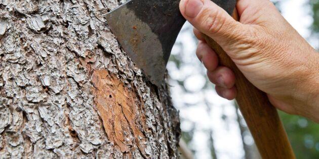 Information om barkborrar på lokala möten
