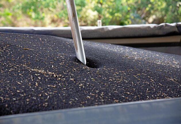 Avgörandets stund – kvaliteten på skörden snabbanalyseras genom att ett stort rör sticks ned på flera ställen i lasten.