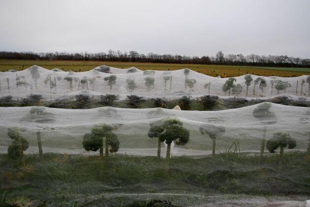 Det tog tio år för paret Sjöblom att hitta en lämplig plats för att bygga upp sin gård. Det är viktigt med rätt markbeskaffenhet.