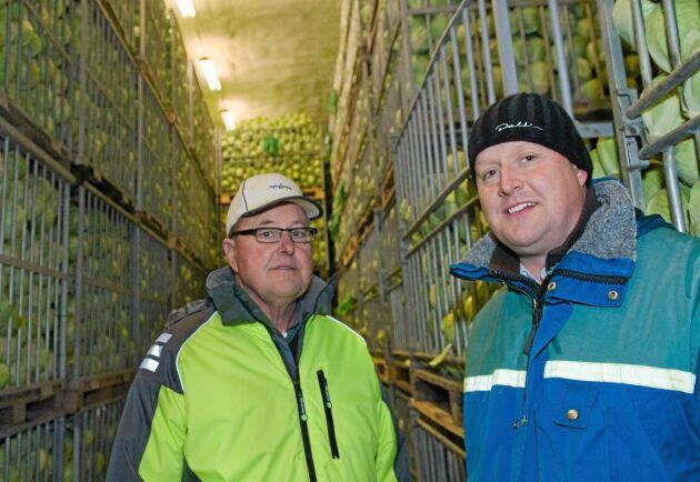 Tore och Fredrik Aronsson på Rasegården utanför Götene har odlat vitkål till Dafgårds i många år men tvekar inför att fortsätta.