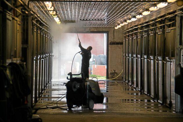 Tvättning av stall - bakom framgången står ett 25-tal anställda som ansvarar för de 100 tävlingshästarna.