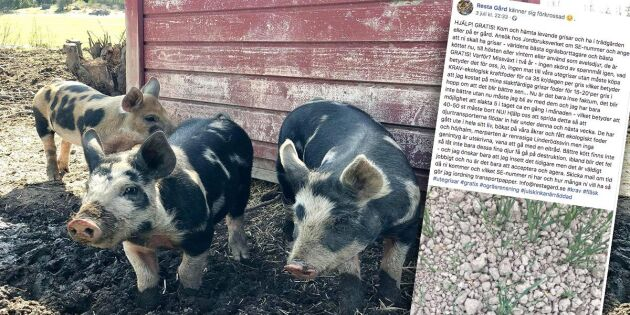 De tvingades ge bort sina grisar –till följd av torkan