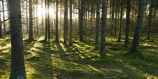 Skogsstyrelsen lämnar ut internt tipsregister