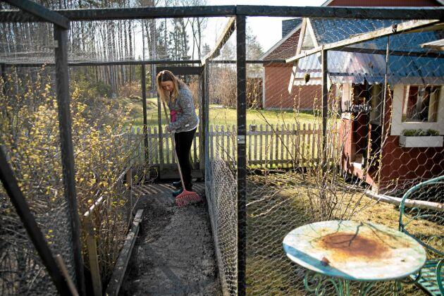 """Varje dag """"mockar"""" Camilla inne i hönsgården med krattan. Foto: Pia Gyllin"""