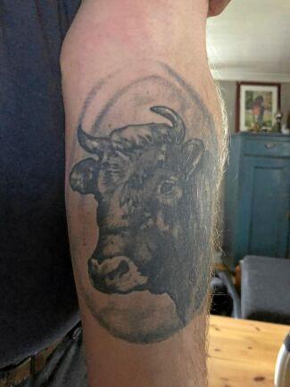 Tjuren symboliserar lantbrukets djur för Ulf Magnusson, som i många år drivit lantbruk med nöt och häst.