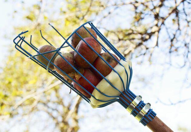 Fruktplockaren är en klassiker bland trädgårdsredskap.