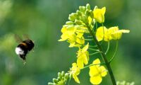 Initiativ ska rädda livsviktiga pollinerare