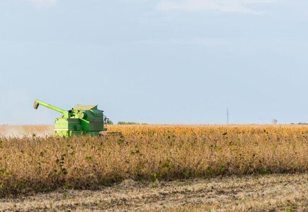 De nya tullarna påverkar i stor utsträckning amerikanska bönder.