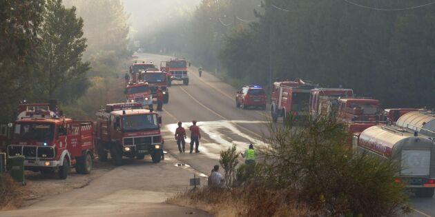 Många döda i skogsbränder i Portugal