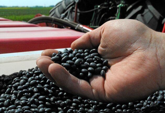 Bruna bönor från Öland skyddas inte av Mercosuravtalet.