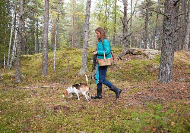 Kantarellsök är ett samspel mellan människa och hund. De kan inspirera och locka varandra.