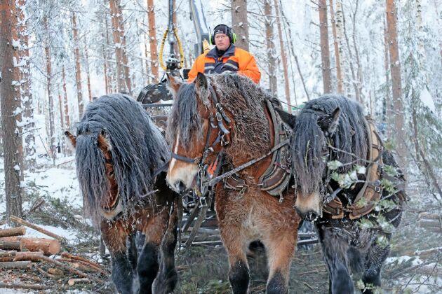 Hans-Olof lundgren skotar med häst och vagn.