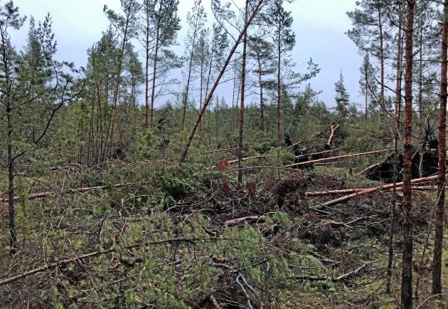 Skogsskador på Gotland efter stormen Alfrida.