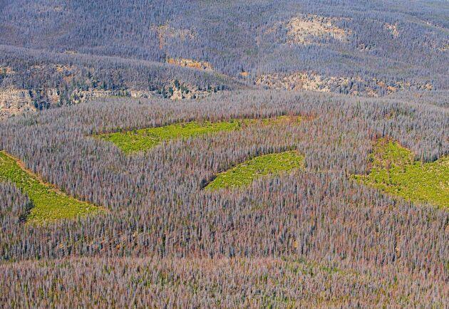Hemma i British Columbia är expansionsmöjligheterna små för Canfor, detta sedan råvarutillgången begränsats rejält efter insektsangrepp.