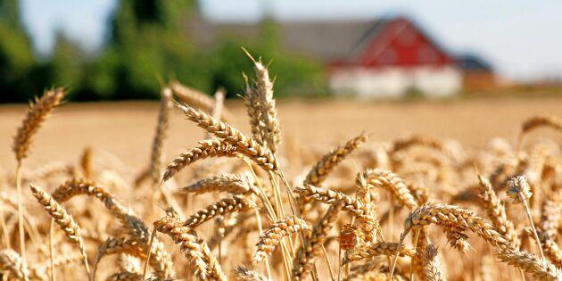 55 miljoner till torkdrabbade lantbrukare