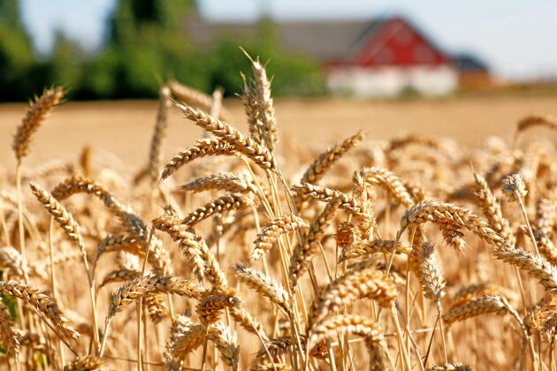 55 miljoner går ut till torkdrabbade lantbrukare under denna vecka.