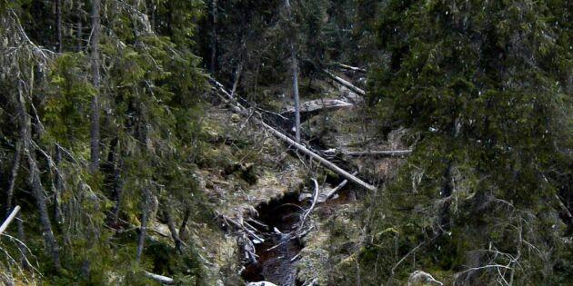 Vi som vårdar skogen förföljs och straffas