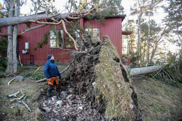 Jonny Nord, lantbrukare och tillsynsman för skärgårdsstiftelsen på Arholma, inspekterar nedfallna träd och skador på fastigheter på södra Arholma under fredagen.