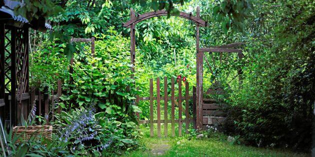 10 tips till dig som deltar i Öppen Trädgård!