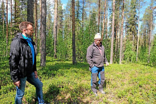 Sveaskogs Roger Hällestrand och Robert Lind, Umbyns sameby, är överens om att röjning gynnar både skogsbruket och rennäringen.