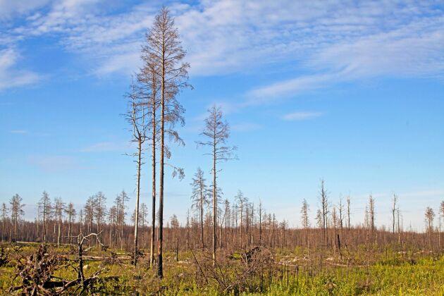 Stora Vallsjön Hälleskogsbrännan naturreservat, Västmanland.