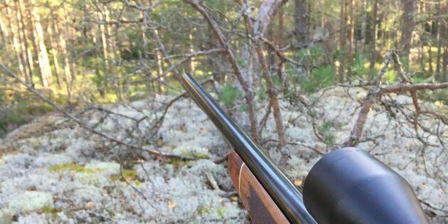Nytt vapen mot vildsvinen