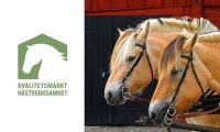 """Ny certifiering för hästföretag: """"Visar att man är professionell"""""""