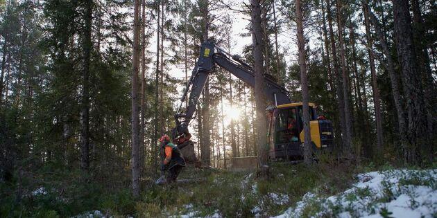 Lyckad samverkan mellan skogsbruk och naturvård