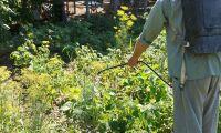 Kommun vill införa förbud mot växtskyddsmedel