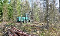 Därför ökar volymen skog i Sverige
