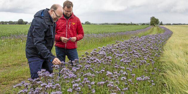 I sommar ska hela Skåne blomma