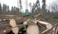 Minst en årsavverkning föll i stormen på Åland