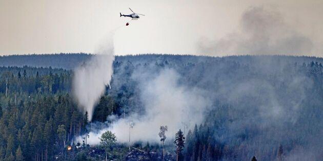 Säsong för gräs- och skogsbränder samtidigt