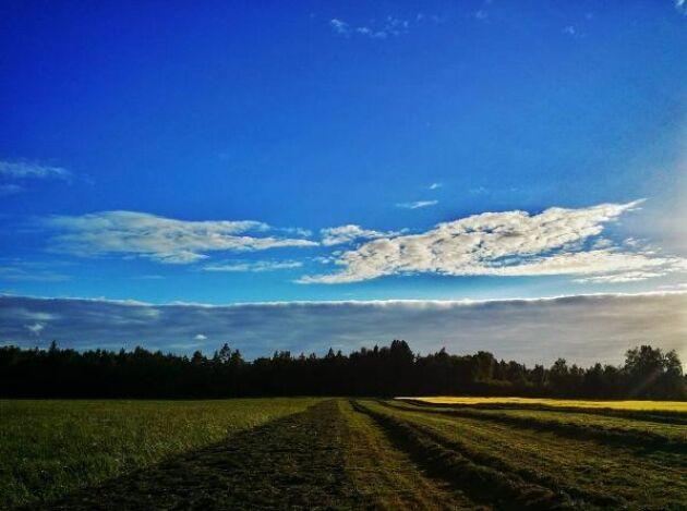 """""""Bild från gårkvällens arbete. Tycker det #grannastefältet är här i olika skeden av skörden"""", hälsar Martiniholma på Instagram."""