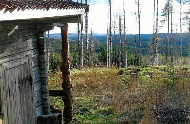 Från stugan ser du bergen mellan tallarna.