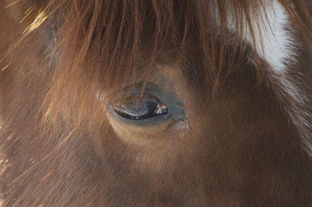 Hästarna skadades efter att någon kört med fyrhjuling i hagen.