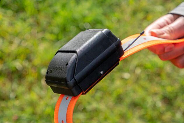 GPS-halsband kan hjälpa till att hålla koll på djuren på bete.