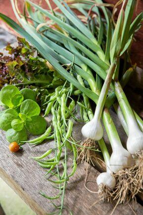 Alla grönsaker som blir över när Ing-Marie och Stefan tagit det de behöver till husbehov, säljer de i gårdsbutiken.