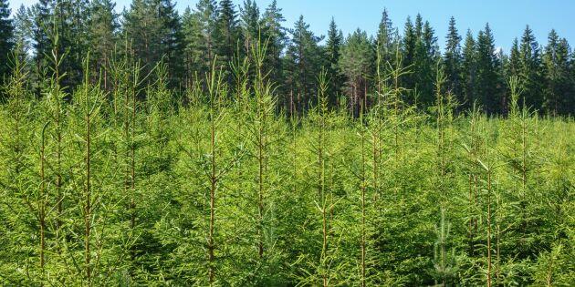 Norrplant: Vårt mål är plantor i toppskick