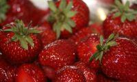 Lite fusk med jordgubbar förra året