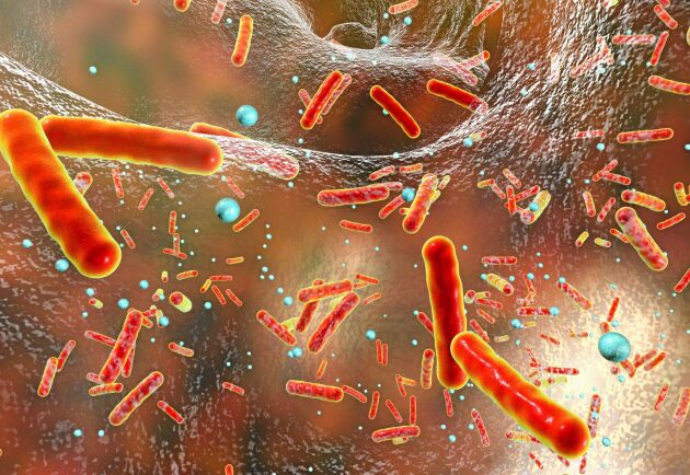 Redan 2025 beräknas att fler människor kommer att dö av antibiotikaresistens än av cancer.