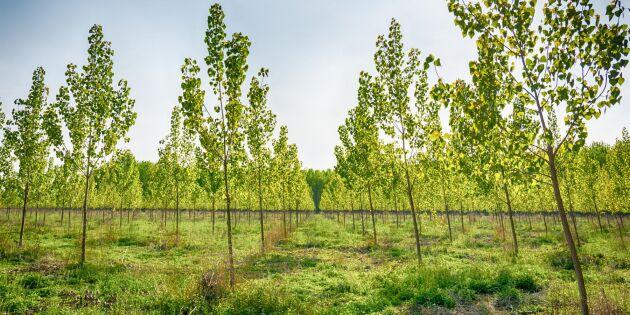Skogsplantor dör i torkan