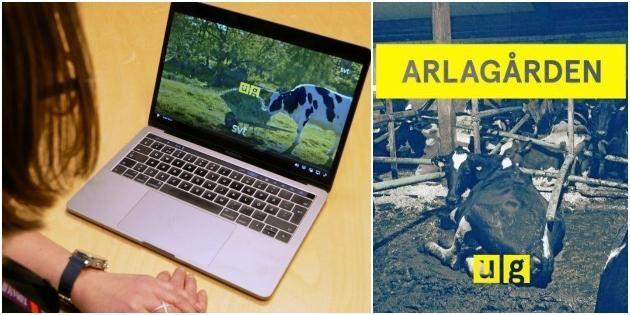 """""""Uppdrag granskning"""" väcker frågor om Arlas och länsstyrelsens roller"""