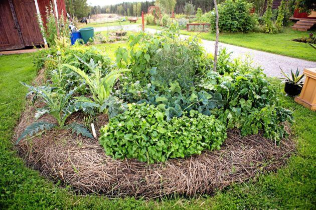 Trädgården och grönsakslanden är indelade i olika avdelningar.