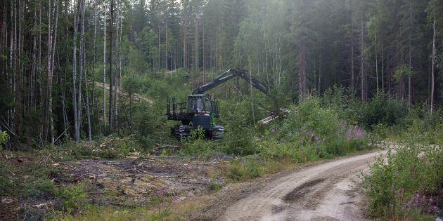 Därför har Finland färre skogsbränder