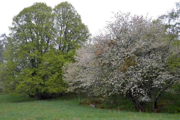 Närheten till Vätten och de branta höjderna gör att lövträd trivs i biosfärområdet Östra Vätterbranterna.